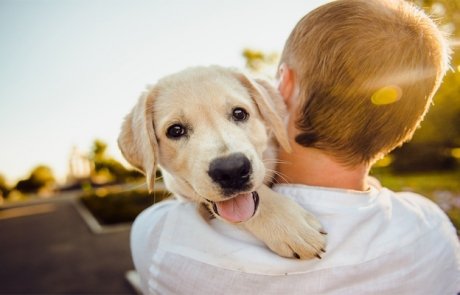 What is the True Cost of Pet Ownership?